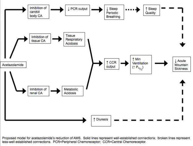mechanism acetazolamide altitude sickness